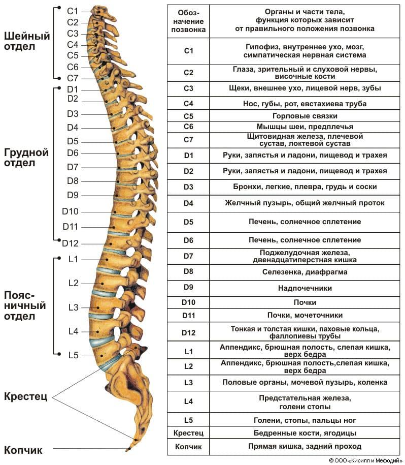 Как делают мрт позвоночника - Ортопед.info