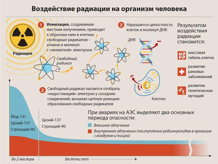 Как вывести радиацию из организма после компьютерной томографии — LiveAcademy