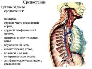 Мрт грудной полости что включает