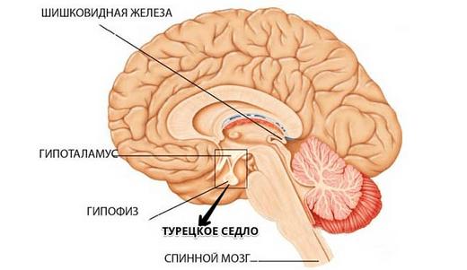 Основные сведения об МРТ турецкого седла